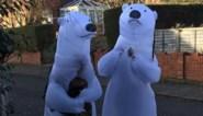 Grootouders trekken ijsbeerpak aan om met kleinkinderen te kunnen knuffelen