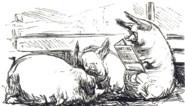 Nu populair, maar al eeuwenoud: hoe een obese begrafenisondernemer zijn volk leerde vermageren met een ketodieet