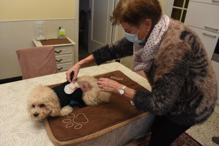 """Hondenbaasje doet oproep na bijtincident: """"Hou je dier altijd onder controle"""""""