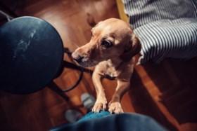 Vuile poten van een vrolijk opspringende hond op je kleren? De dierendokter weet raad