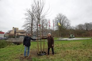 Verzoeningsboom op Canadezenplein eert bevrijders Wereldoorlog II