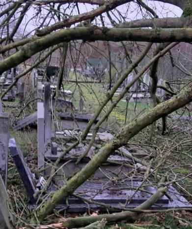 Omgevallen boom beschadigt graven