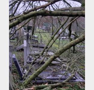 Omgevallen boom beschadigt graven<BR />