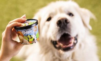 Ben & Jerry's maakt nu ook ijs voor honden
