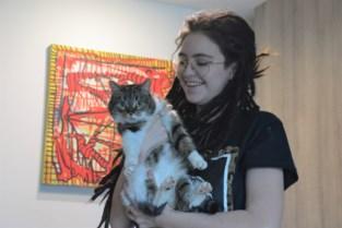 """Avontuurlijke kattin Basil na jaar terug bij baasje: """"Nooit gestopt met zoeken"""""""