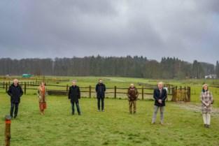 Binnenkort één groot Brabants woud? Gemeenten scharen zich achter project om natuur beter met elkaar te verbinden