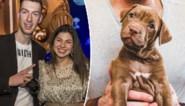 Vlaams YouTube-koppel onder vuur voor aanschaf puppy via broodfok, maar hoe koop je op de juiste manier een hond?