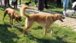 Ook hondenspeelweide in Londerzeel-Sint-Jozef