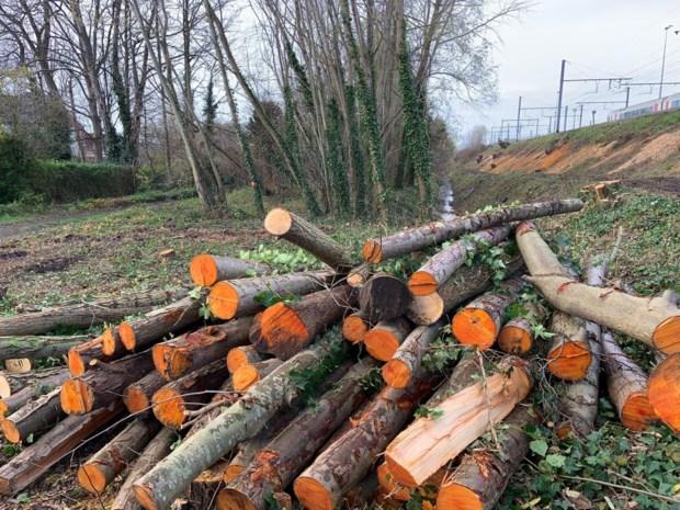 """100 bomen gekapt aan Sint-Denijslaan, buurtbewoners zijn boos: """"Het is een uniek stukje groen"""""""