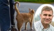 De dierendokter legt uit waarom zelfs gesteriliseerde katten dezer dagen krols gedrag kunnen vertonen