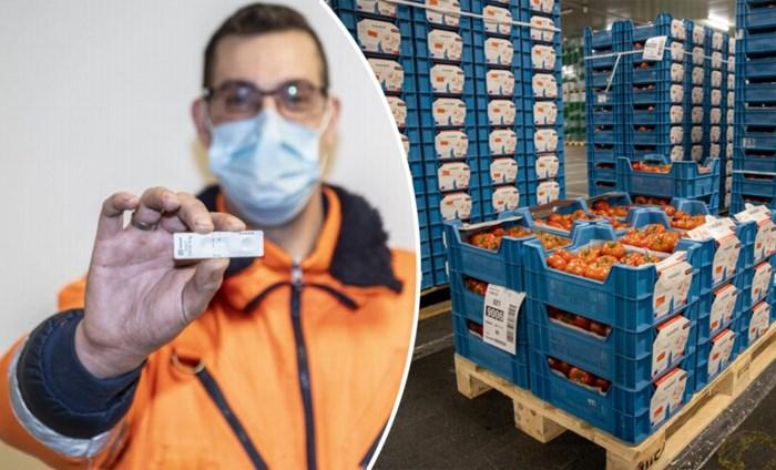 """Sneltesten kunnen veiling redden in coronatijden: """"Anders kunnen 100.000 verse groenten verloren gaan"""""""