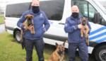 Politiezone Arro Ieper verwelkomt twee nieuwe politiehonden Bolt en Jack