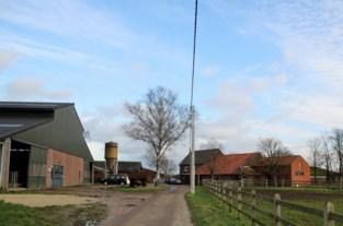 Landbouwer uit Lozen verongelukt tussen zijn runderen op stal