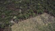 Minstens 43 miljoen hectare woud vernietigd tussen 2004 en 2018