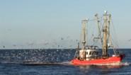 """Britse vissers kampen met enorme overschotten door Brexit-rompslomp, maar vissen in zijn nu """"gelukkiger"""", aldus brexiteer"""
