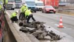 Na het gat in de weg: opnieuw wegverzakking en verkeersmiserie op E17