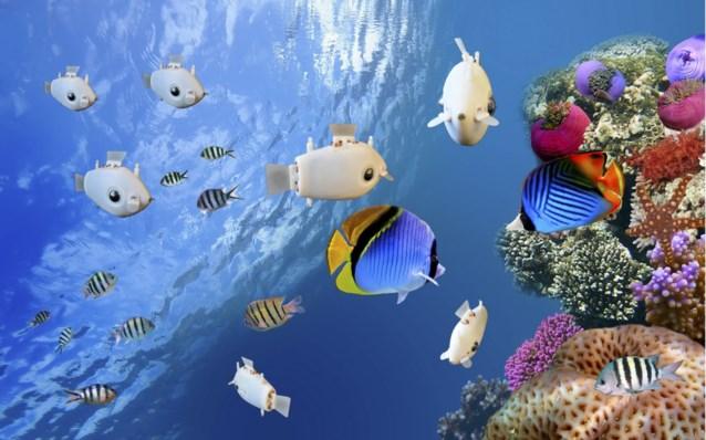 Ze communiceren met elkaar, zwemmen in scholen en kunnen uw leven redden: de robotvis