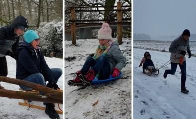Vlaanderen geniet volop van sneeuwtapijt: bekijk hier de leukste beelden