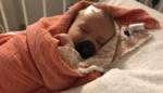 """Twee maanden oud is ze, maar toch moet de kleine Louize al twee keer onder het mes voor hersentumor: """"We voelden dat er iets niet klopte"""""""