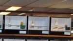 De Nachtegaal Hakendover houdt vogeltentoonstelling in Orsmaal