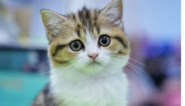 """Druggebruiker sloeg kat dood: """"Ik krijg het bijna niet over mijn lippen, maar ik gooide ze tegen de grond"""""""