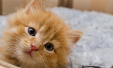 Man (22) die kitten wurgde tijdens 'donkere periode' moet boete betalen