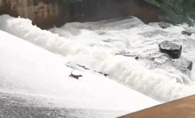 Man riskeert eigen leven om hond uit overstromende dam te redden