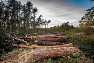 Omgekeerde wereld: Natuurpunt kapt bomen van twee voetbalvelden groot bos en kan geen garanties voor compensaties geven, buren en gemeente furieus