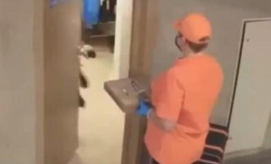 Pizzakoerier levert bestelling, maar schrikt zich een ongeluk wanneer klant opendoet
