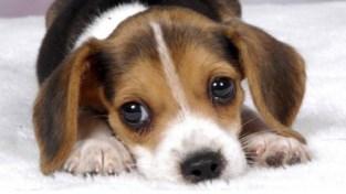 """Discussie over puppy eindigt in vechtpartij: """"Ik wou gewoon mijn hond terug"""""""