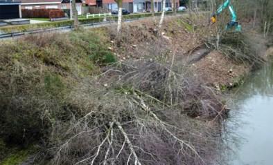 En plots waren ze weg: zo moet er een einde komen aan de drastische bomenkap langs kanalen en wegen