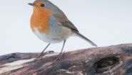 Komend weekend weer vogels tellen