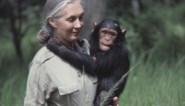 """Natuurbescherming wil dat tv-makers ophouden selfies te maken met apen: """"Ze zouden eens moeten weten hoe die dieren tam gemaakt worden"""""""