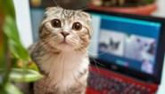 """Dertiger betrapt door vriendin terwijl hij kitten wurgt: """"Ik zag dit als ideale oplossing om haar te doen vertrekken"""""""