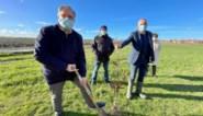 """Ontbossing in Vlaanderen? Hier krijgen ze er straks 50.000 bomen bij: """"Wij doen er tenminste écht iets aan"""""""