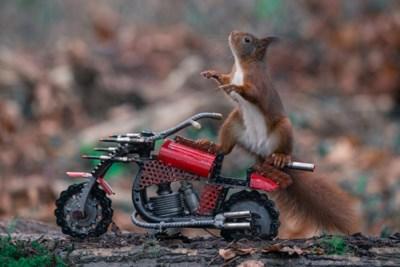 Documentaire over Limburgse 'eekhoornfotograaf' in vijf dagen tijd al vier miljoen keer bekeken