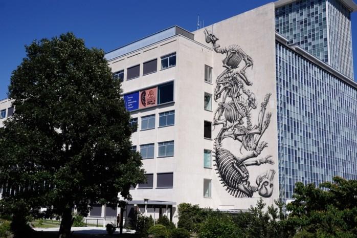 Vijf van de mooiste muurschilderingen van ons land zijn in Gent te bewonderen