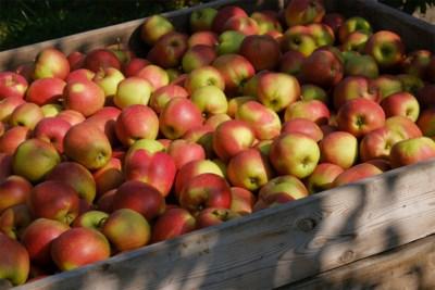 Frauduleuze fruitverkopers op pad