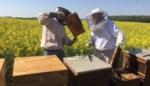 Lessenreeks om te leren omgaan met bijen verdaagd
