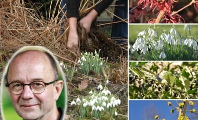De bloemen en planten die net fan zijn van de koude: zo ga je om met winterbloeiers