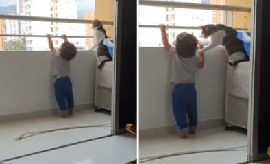 Slimme kat weerhoudt jongetje ervan op balustrade van balkon te klimmen