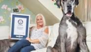 Grootste hond ter wereld is overleden