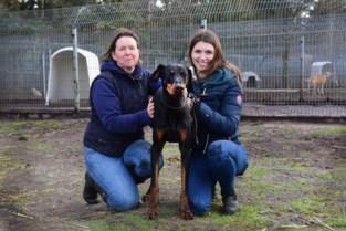 Stormloop op huisdieren in asielen blijft aanhouden