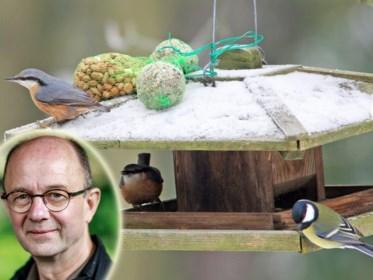 Vul een schaaltje met water en voorzie een vaste voederplek: zo maak je je tuin vogelvriendelijk