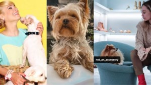 Gaia en BV's willen met nieuwe campagne voorkomen dat dieren impulsief worden gekocht