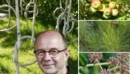Als het iets meer mag zijn dan een bosje bloemen: de Groenman kiest 'romantische' bomen voor Valentijn