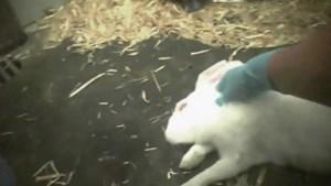 """Gaia: """"Aantal dierproeven in Vlaanderen met 3 procent gedaald in 2019"""""""