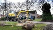 Geld voor klimaatbomen geraakt niet op