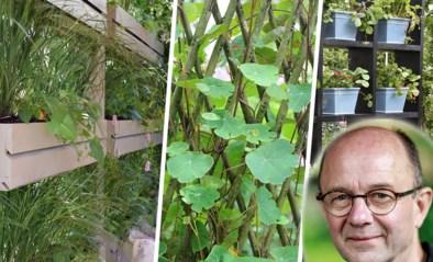 Sloop die muur! Zo scherm je je tuin af van pottenkijkers zonder aan groen in te boeten