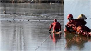 Brandweer begeeft zich op glad ijs om hond te redden uit bevroren vijver